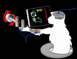 BMI-Experimental-Setup-Figure_v3